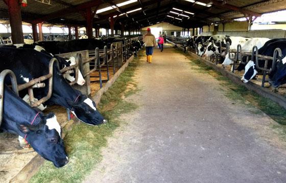 奶牛农场养殖基地