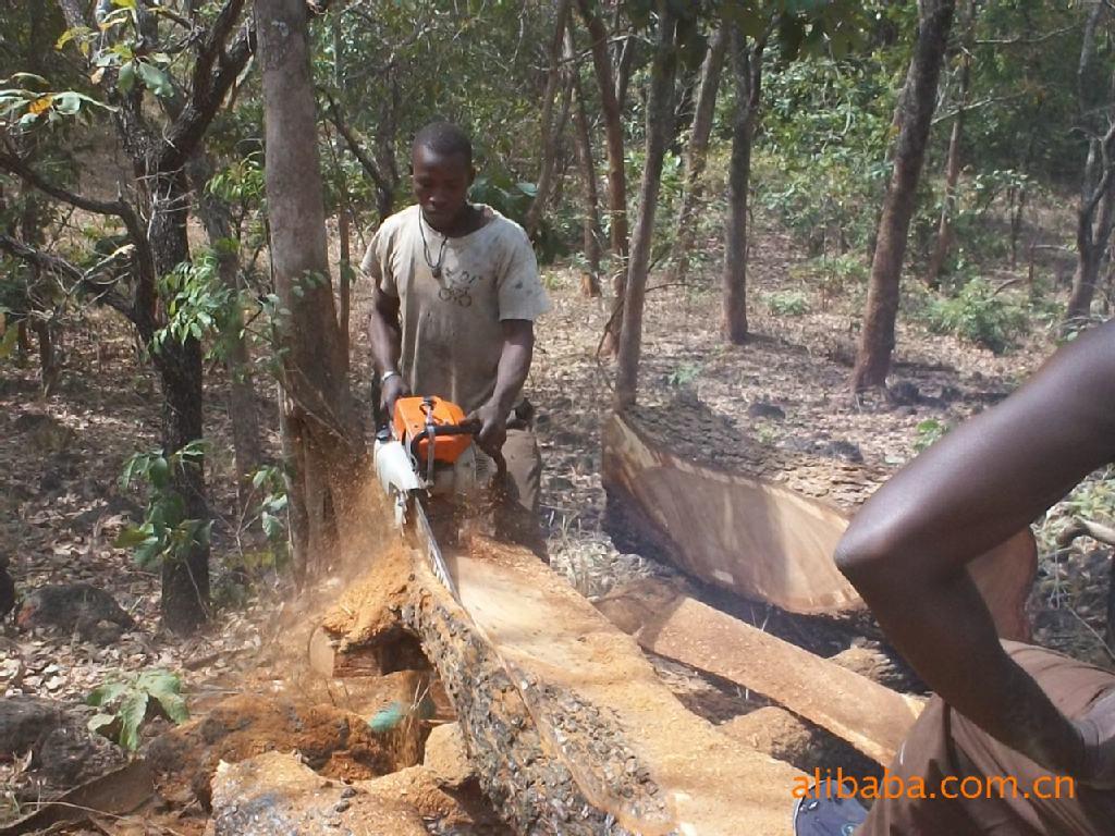 加纳木材出口数量减少价值上升